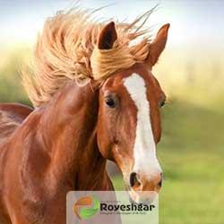 شاخص-علوفه-هیدروپونیک-اسب
